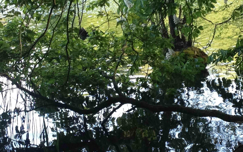 Foto von Ästen, die in einen Berliner See hängen.
