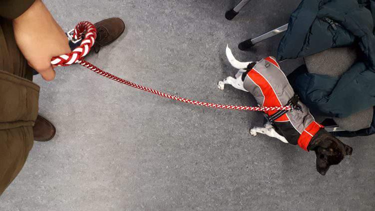 Mutsammlerin hält Hund an der Leine
