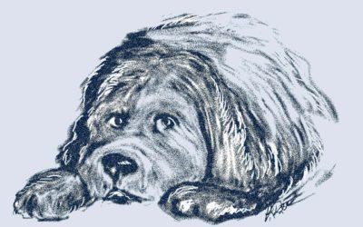Coronavirus: Kann ein Hund mich anstecken?